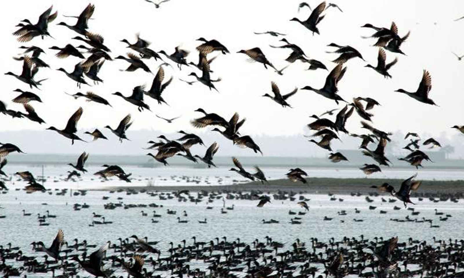 Madhabananda Panda's odia poem for children Aasa Aasa Aame Chilika Jibaa